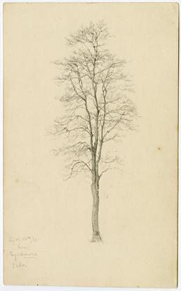 Sycamore, 13 April 1885