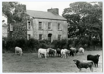 Ballayonaigue Farm, Bride
