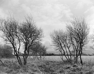 Curraghs field
