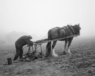 Mr Fargher drilling turnips, Ballacomish