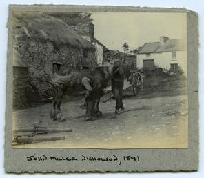 Horse outside a thatched farm building