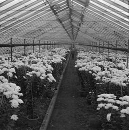 Hotchkiss Greenhouses