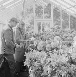 Corporation Nurseries, Ballaughton