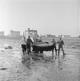Dolphin rescue, Derbyhaven