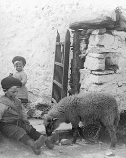'Pet Lamb at Fistard', Isle of Man