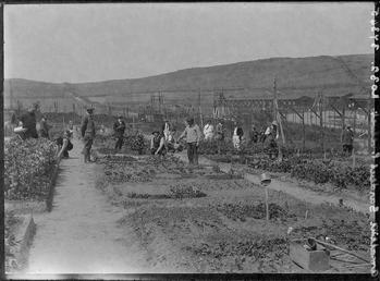 First World War Internees, Allotments (Internment Huts in…