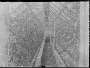 First World War Internee Greenhouse (Interior), Allotments, Knockaloe…