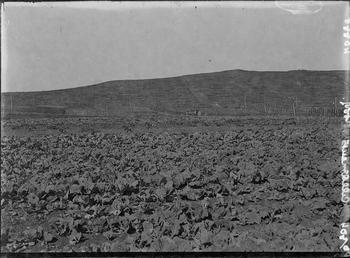 First World War Internee Allotments, Knockaloe Camp, Isle…